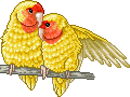Goldbeak