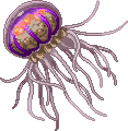 unnamed Medusozoa