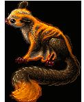 Night Tail